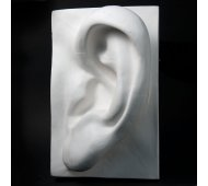 Drawing Plaster Cast Ear (Giant)