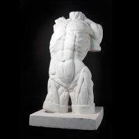 Drawing Plaster Cast Male Torso (Lifesize)